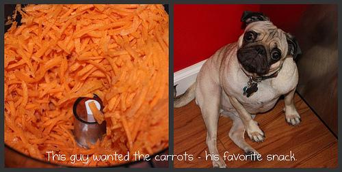 Pug N Carrots
