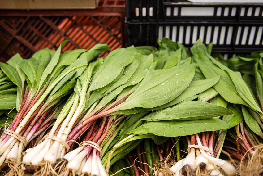 Ramps at Union Square Farmer's Market | girlinthelittleredkitchen.com