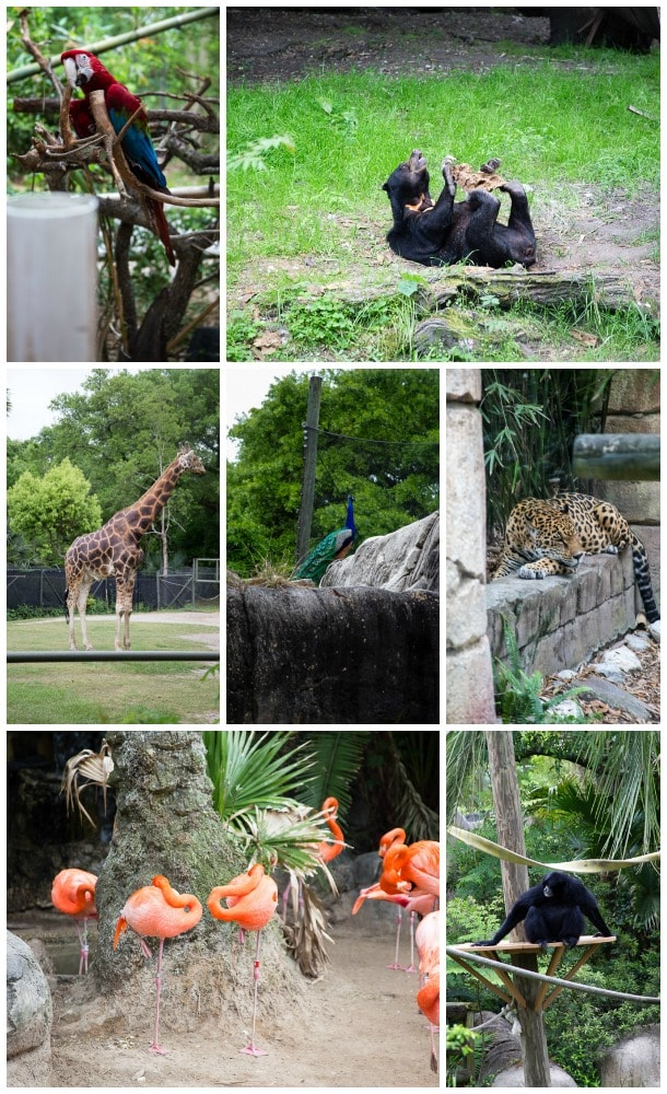 New Orleans Zoo