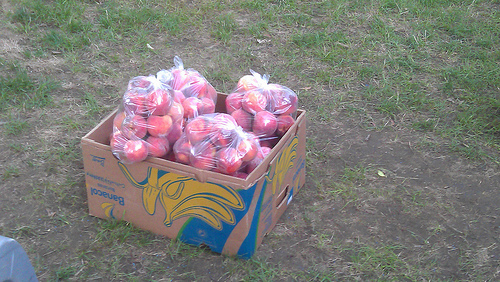 Peaches from Ditmas Park CSA pickup