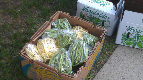 Green and Wax Beans from Ditmas Park CSA pickup