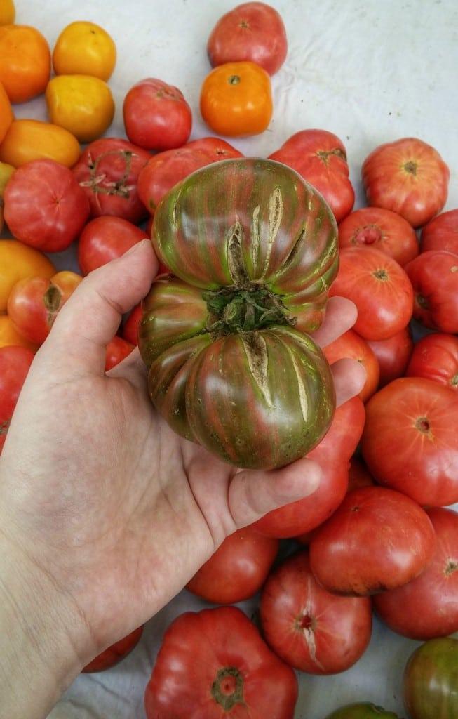 Heirloom Tomatoes | girlinthelittleredkitchen.com